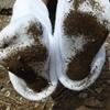 White Socks 画像集001