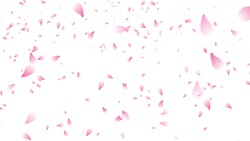 Cherry blossom petals falling background stock (white background)